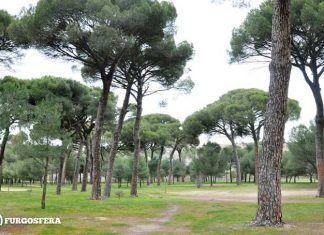 Bosque Valorio en Zamora