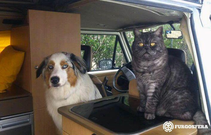 Perro y gato en furgoneta