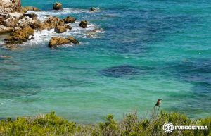 Playas para perros Baleares