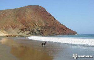 Playas para perros, Tenerife