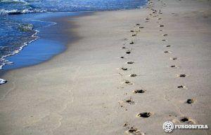 Playas para perros Catalunya