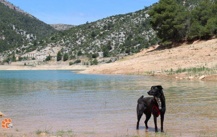 Lo peor de viajar con perros