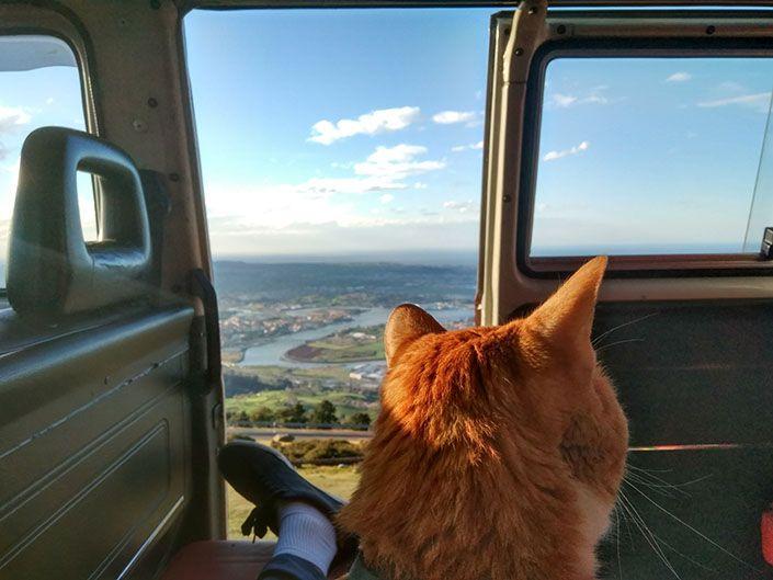 Pies, gato y Cantabria