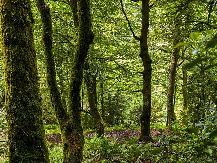 O Courel, unos de los sitios más impresionantes que visitar en Galicia