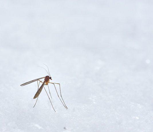 furgo y picaduras de mosquito