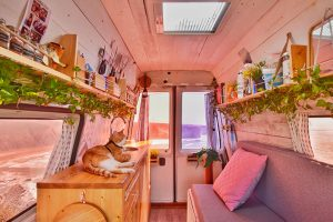 viajar con gatos en furgo